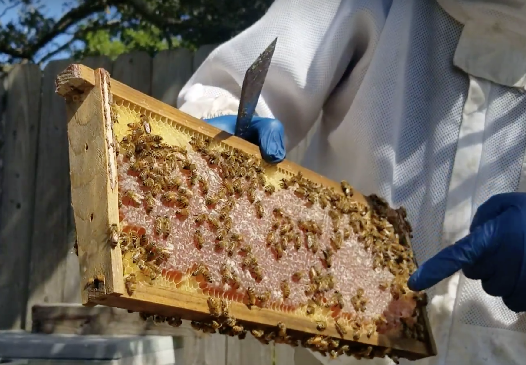 When Tracey Johnson requested a tour of Florida Bee Farm, she got more than she bargained for.